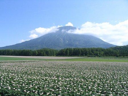 羊蹄山とジャガイモ畑.jpg